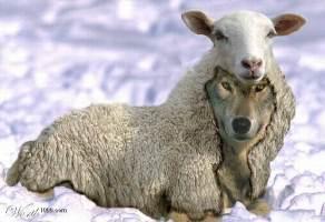 Волки в овечьей одежде